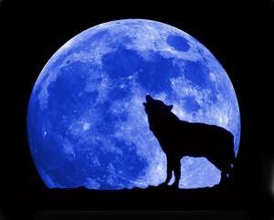 blue-moon-wolf-full